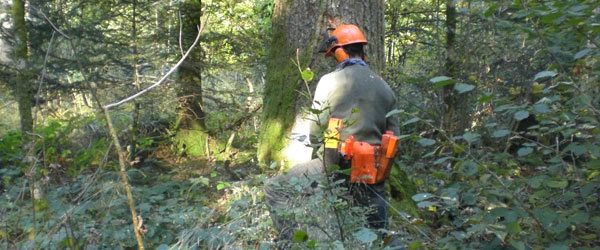 Start of SOC courses: Forestry Technic and Ecological Agriculture.