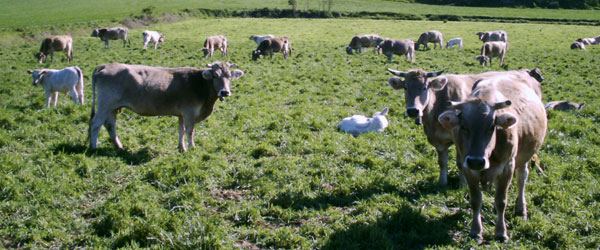 The next animal welfare course for livestock farm-holders